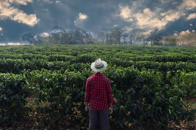 Agriculteur avec chapeau à la recherche du champ de la plantation de café Photo Premium