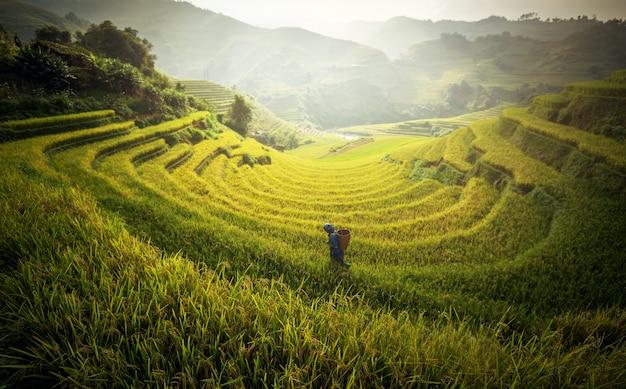 Agriculteur dans des rizières en terrasse pendant la saison des pluies à mu cang chai, au vietnam. Photo Premium