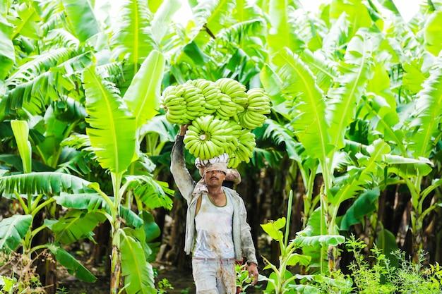 Agriculteur indien au champ de bananes Photo Premium