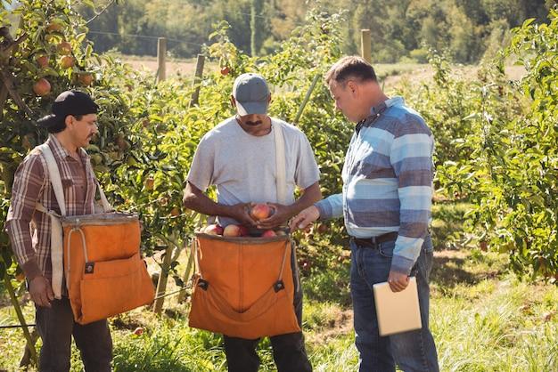 Agriculteur interagissant avec des agriculteurs dans un verger de pommiers Photo gratuit