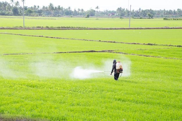 Agriculteur pulvérisant un pesticide dans la rizière Photo Premium