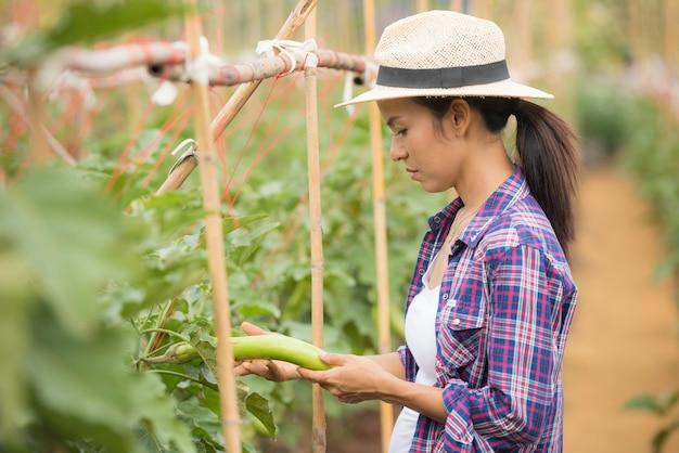 Agriculteur récoltant ou ramassant l'aubergine thaïlandaise d'un arbre dans une ferme maraîchère Photo gratuit
