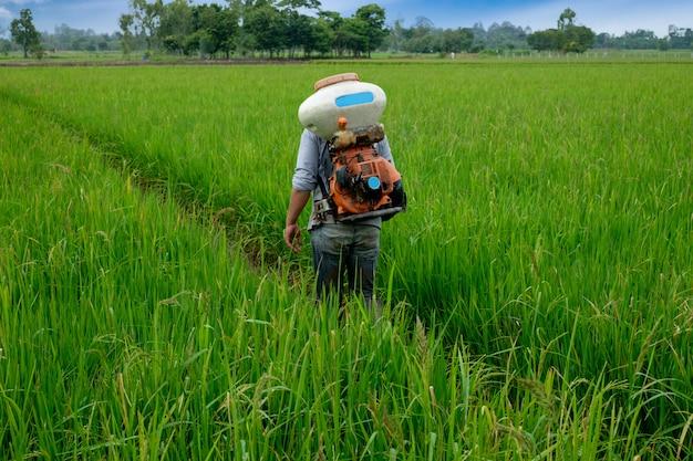 Agriculteur thaïlandais asiatique aux herbicides ou engrais chimiques équipement dans les champs Photo Premium