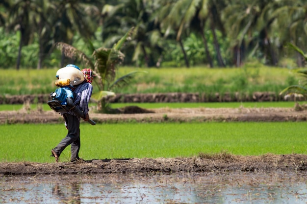 Un agriculteur thaïlandais marchant pour pulvériser les semences de paddy à l'aide d'un pulvérisateur l'après-midi Photo Premium