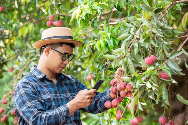 Les agriculteurs appellent les capitalistes à vendre du litchi. Photo gratuit