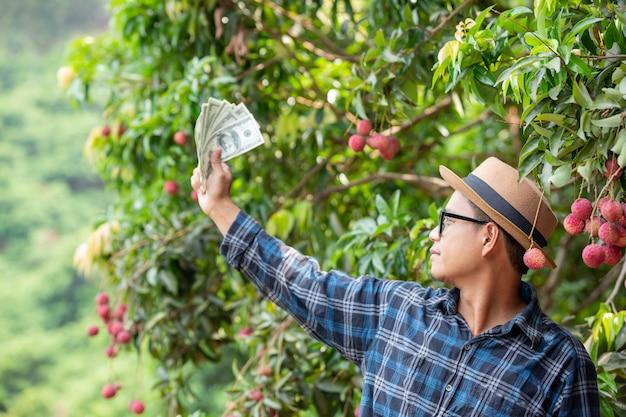 Les agriculteurs comptent les cartes pour la vente de litchis. Photo gratuit