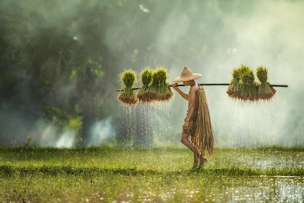 Les agriculteurs cultivent le riz pendant la saison des pluies. ils étaient imbibés d'eau et de boue pour être préparés à la plantation, sakonnakhon thailand Photo Premium