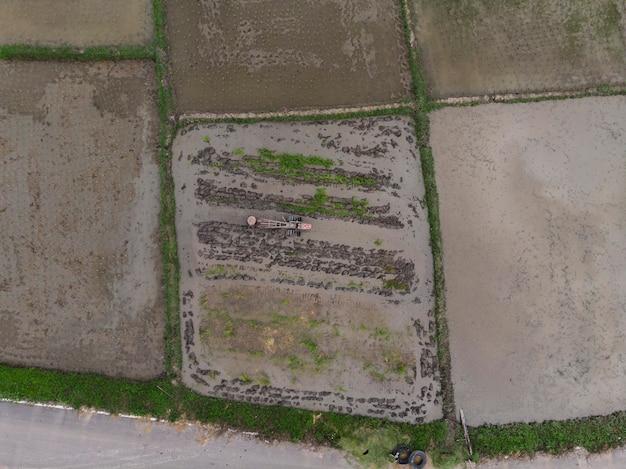Les agriculteurs plantent un champ de riz, vue de dessus, photo aérienne Photo Premium