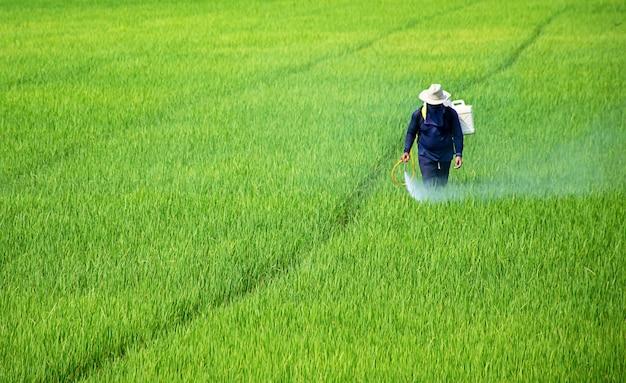 Les agriculteurs pulvérisent les cultures dans un champ vert. Photo Premium