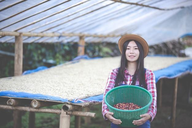 Les agriculteurs qui font pousser des femmes sont heureux de sécher les grains de café Photo gratuit