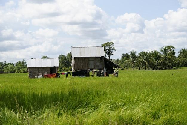 Agriculteurs et ruraux dans les rizières du vietnam Photo Premium