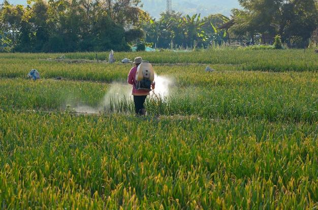 Les agriculteurs thaïlandais pulvérisent des insecticides dans les potagers Photo Premium