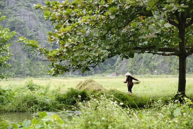Agriculteurs traditionnels vietnamiens cultivant du riz dans les champs asiatiques Photo Premium