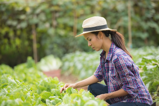 Les agriculteurs travaillent dans une ferme de chou chinois Photo gratuit