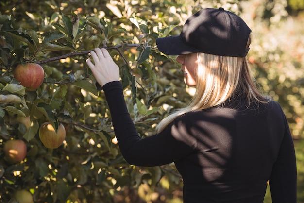 Agricultrice, regarder, pommier Photo gratuit