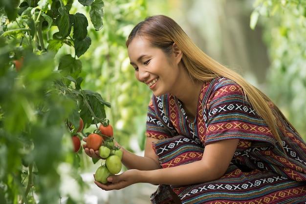 Une agricultrice vérifiant des tomates dans une ferme de tomates Photo gratuit