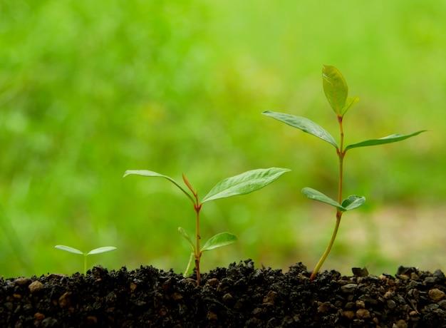 Agriculture planter des semis croissant dans le sol sur fond de nature verdoyante. aimer la terre c Photo Premium
