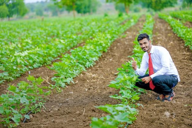 Agronome avec agriculteur au champ de coton Photo Premium
