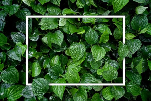 Aimer le concept de la terre. fond de feuille verte Photo Premium