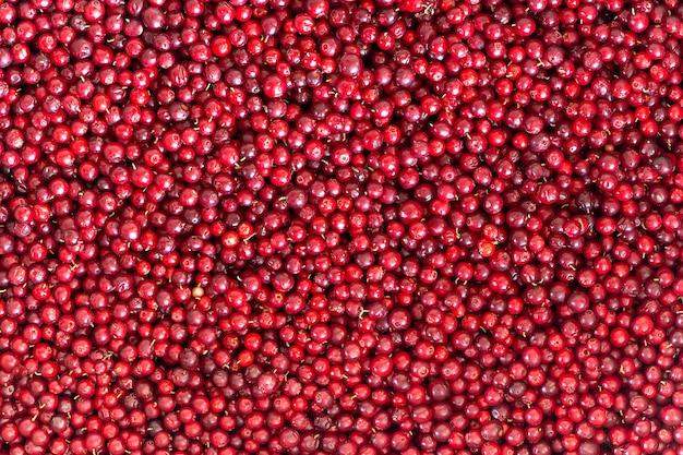 Airelles Naturelles Rouges Mûres, Fond Et Texture Photo Premium