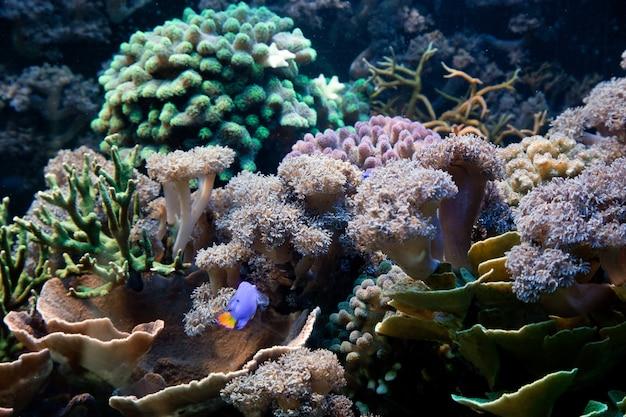 Les algues et les plantes marines Photo gratuit