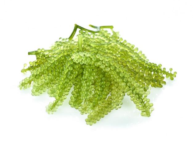 Algues de raisins de mer (caviar vert) isolé sur blanc backgroun Photo Premium