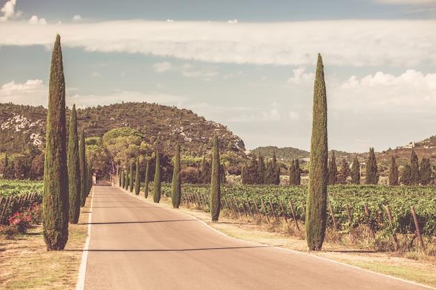 Allée De Cyprès à Travers Les Vignobles Du Sud De La France Photo Premium