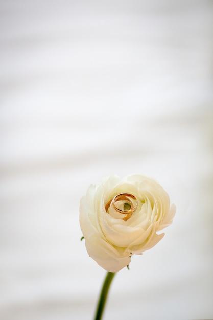 Alliances, or avec rose blanche Photo Premium