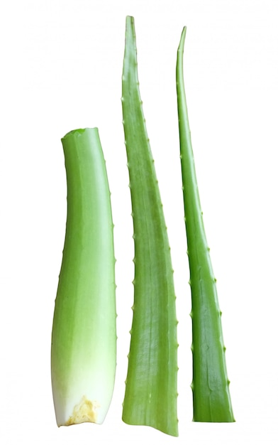 Aloe vera feuille fraîche isolé sur blanc Photo Premium