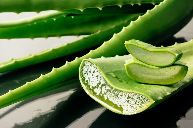 Aloe vera. Photo Premium
