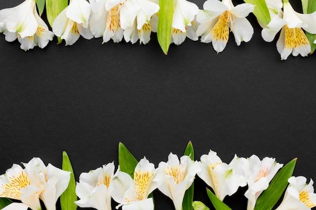 Alstroemeria Blanc Plat Avec Copie-espace Photo gratuit