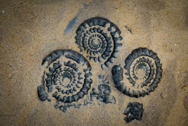 Ammonite fossile pour l'industrie des combustibles et du gaz Photo Premium
