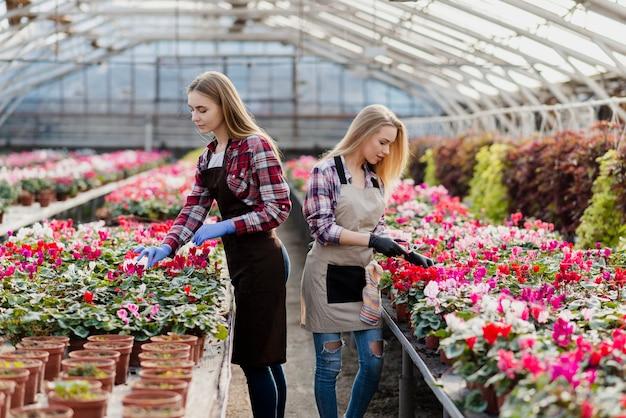 Amoureux Des Fleurs Qui S'occupe De Lui En Serre Photo gratuit