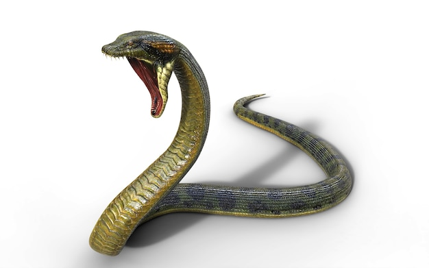 Anaconda, boa constrictor le plus grand serpent venimeux du monde Photo Premium