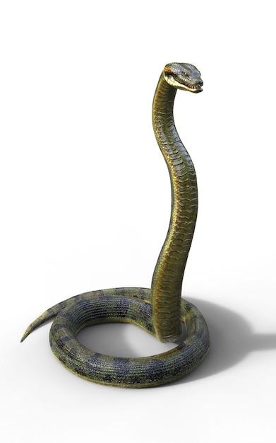 Anaconda, boa constrictor le plus gros serpent venimeux du monde isolé sur fond blanc Photo Premium