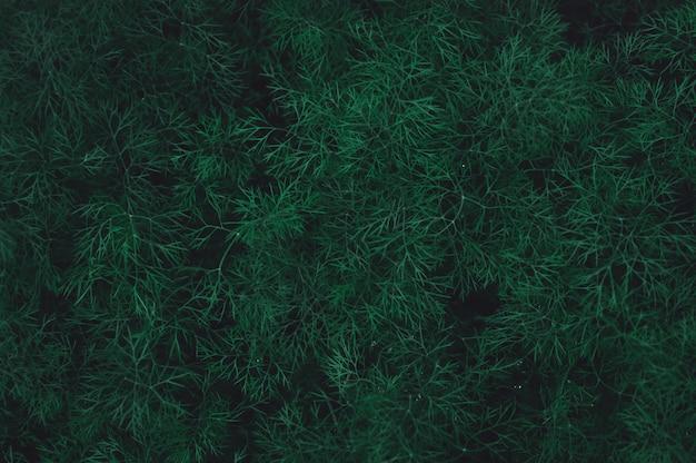 Aneth vert frais feuilles de fond. fond de ton vert foncé de nature Photo Premium