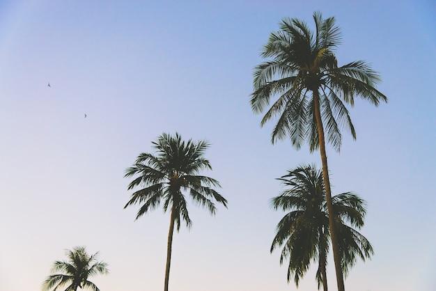 Angeles île paradisiaque filtre tropical Photo gratuit