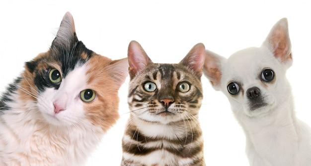 Animal de compagnie en studio Photo Premium