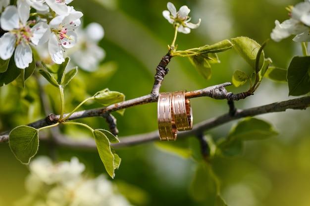 Les anneaux de mariage pendent sur une branche de l'arbre en fleurs Photo Premium