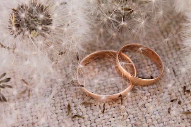 Anneaux de mariage sur les pissenlits de fond Photo Premium