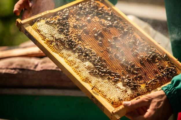 Apiculteur récolte miel Photo Premium