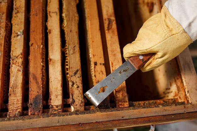 Apiculteur retire un cadre en bois avec nid d'abeille de ruche en utilisant l'outil apiculteur Photo Premium