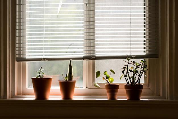 Appui De Fenêtre Avec Des Plantes D'intérieur Dans Des Pots Bruns à L'intérieur D'une Pièce Photo gratuit