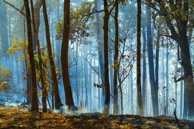 Après Les Incendies De Forêt Tropicale, La Catastrophe Est Causée Par Les Humains Photo Premium