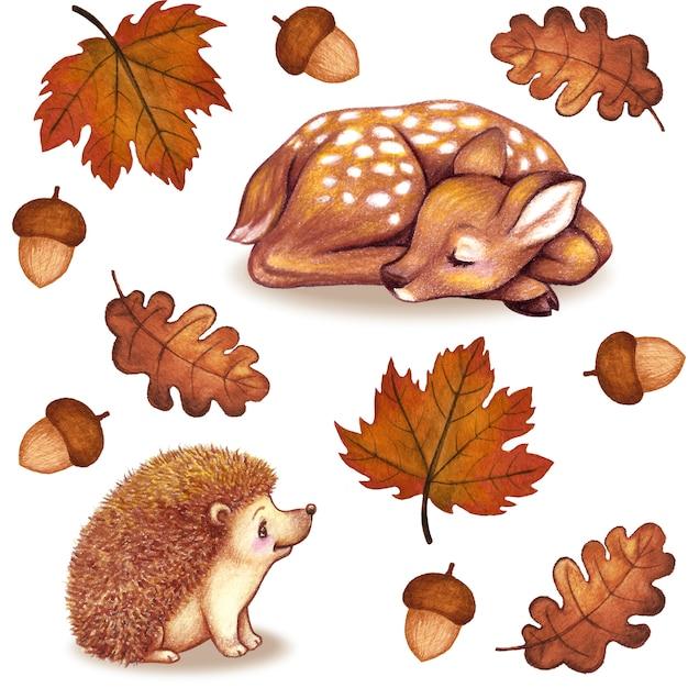 Aquarelle d'automne feuilles collection de glands hérisson faon isolé Photo Premium