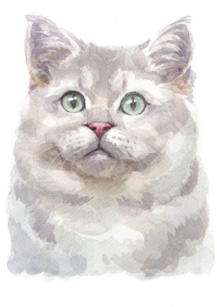 Aquarelle de british shorthair cat Photo Premium