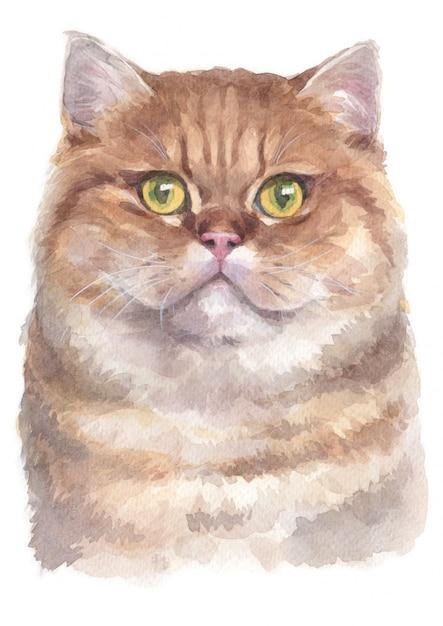 Aquarelle de british shorthair cat Photo Premium