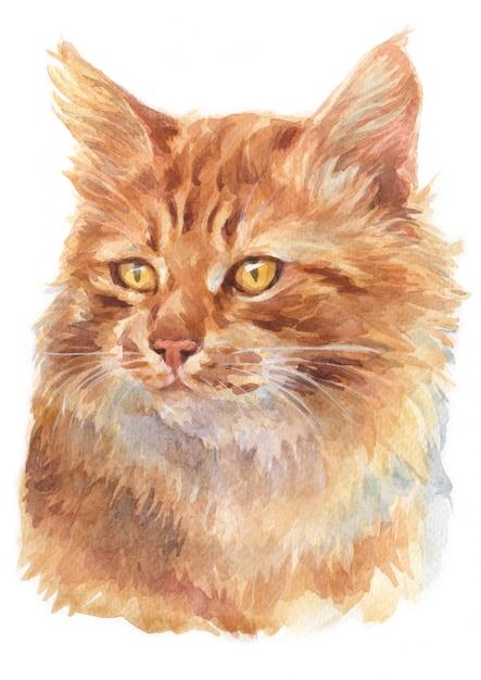 Aquarelle de chat de gingembre poil long Photo Premium