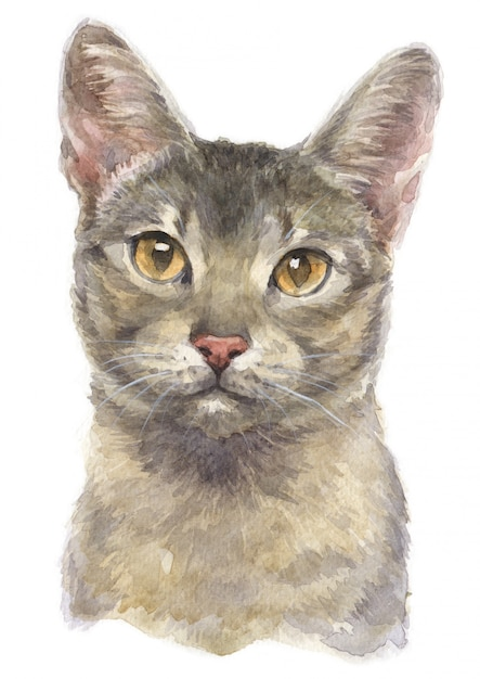 Aquarelle de chat à poil court abyssin Photo Premium