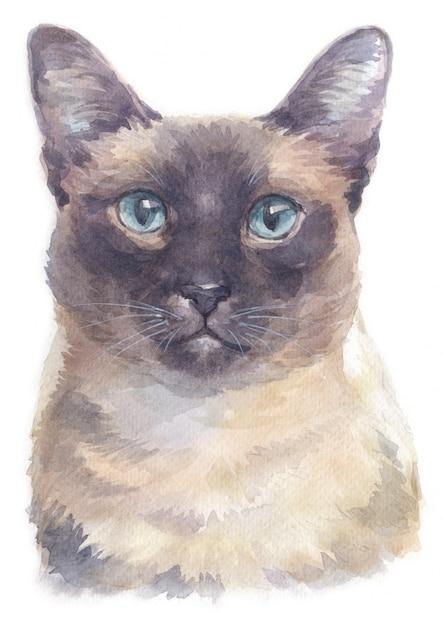 Aquarelle de chat siamois à poil court Photo Premium